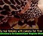 Arab Porn Hijab Free Amateur Porn Video