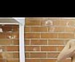 Carmen Caliente: Fresh Hardcore Tube Video