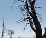 Пешие прогулки и, блядь, на горе Чарльстон-Лас-Вегас