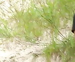 Horny couple in the dunes - Part 1