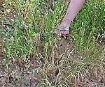 My Dirty Hobby - MiaHaze Beine breit im Freien