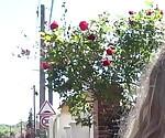 Aurelie 36ans хочет воссоединиться с пола