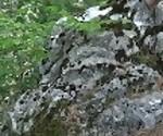 Неизвестный смотрит пописать Vic Alouqua и ставит его пальцы в лесу