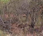african safari babe backseat fucked